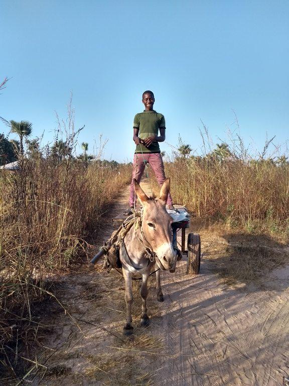 Gambia, ezelkar